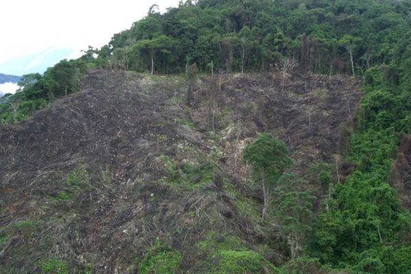 Bosques 2
